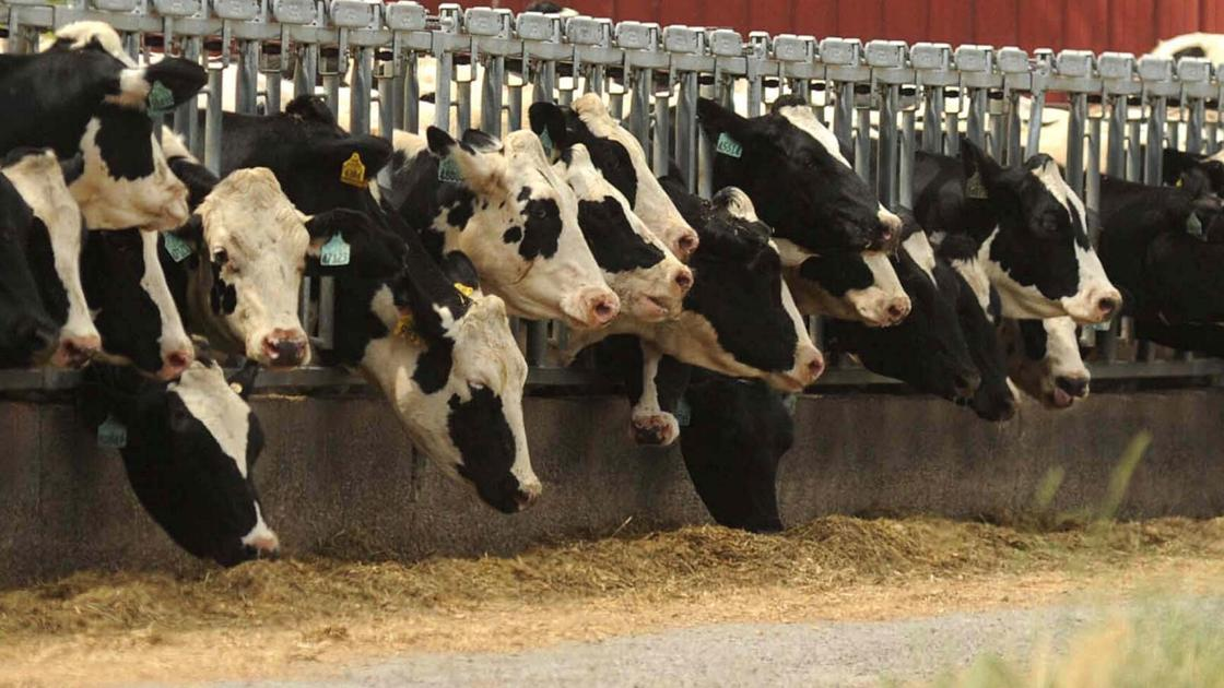 Gillibrand seeks relief for NY dairy farmers