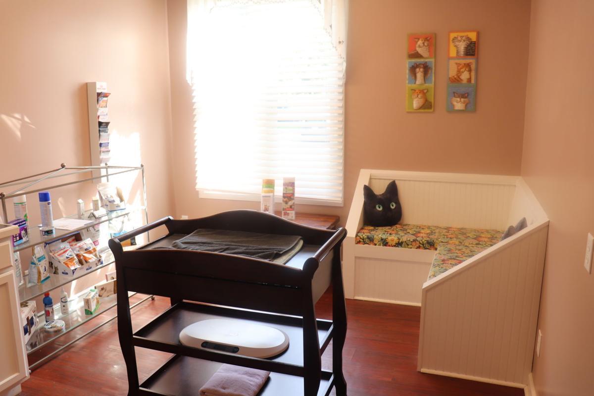 a room at feline veterinary care of morgantown