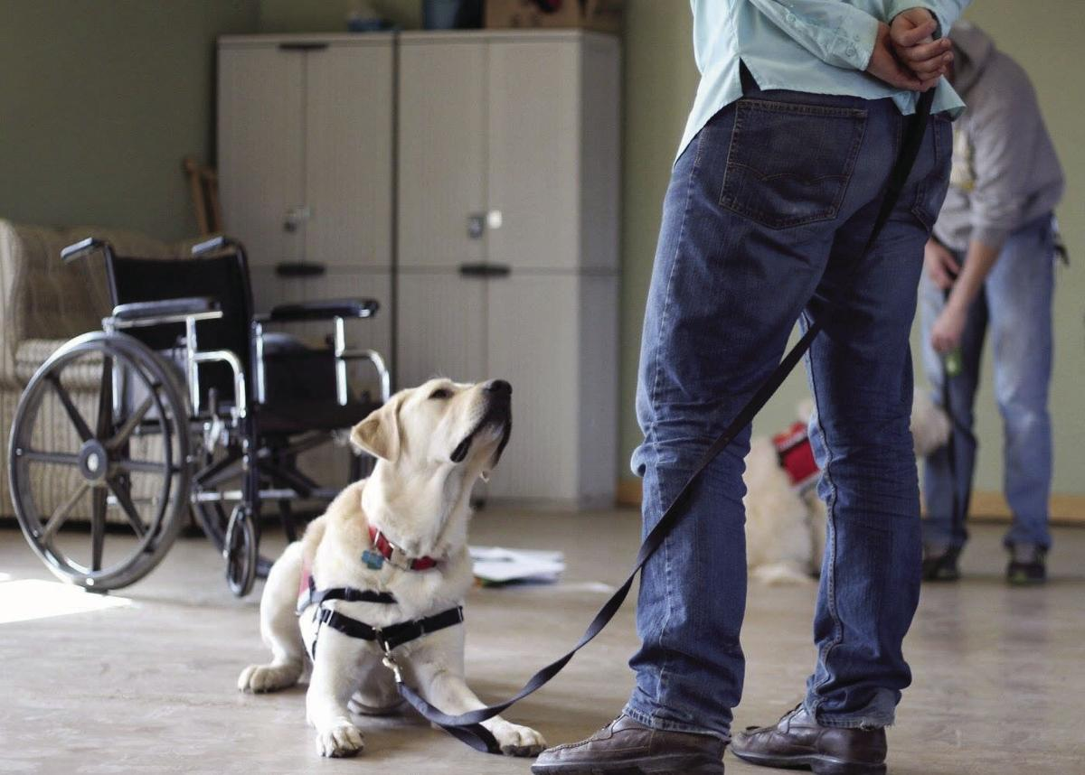 Service Dog - single