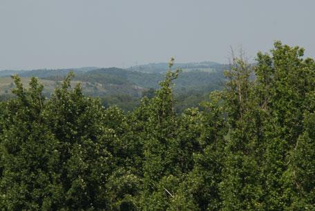 New Division of Forestry & Natural Resources program advises state landowners