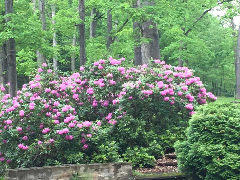 Hasson anniversary event will celebrate arboretum