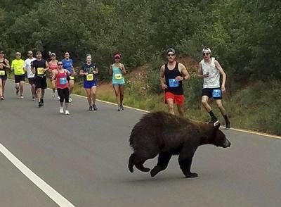 Bear in Race