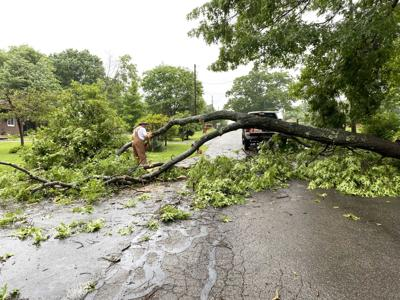 Storms cause downed trees