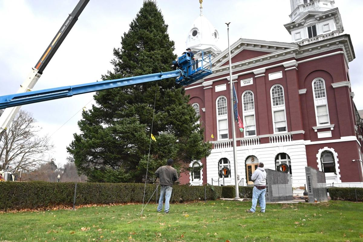 Franklin tree arrives