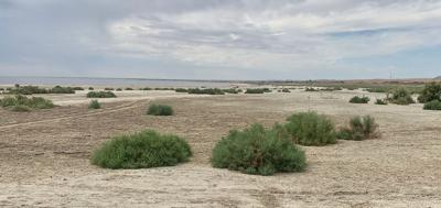 Salton Sea playa foliage