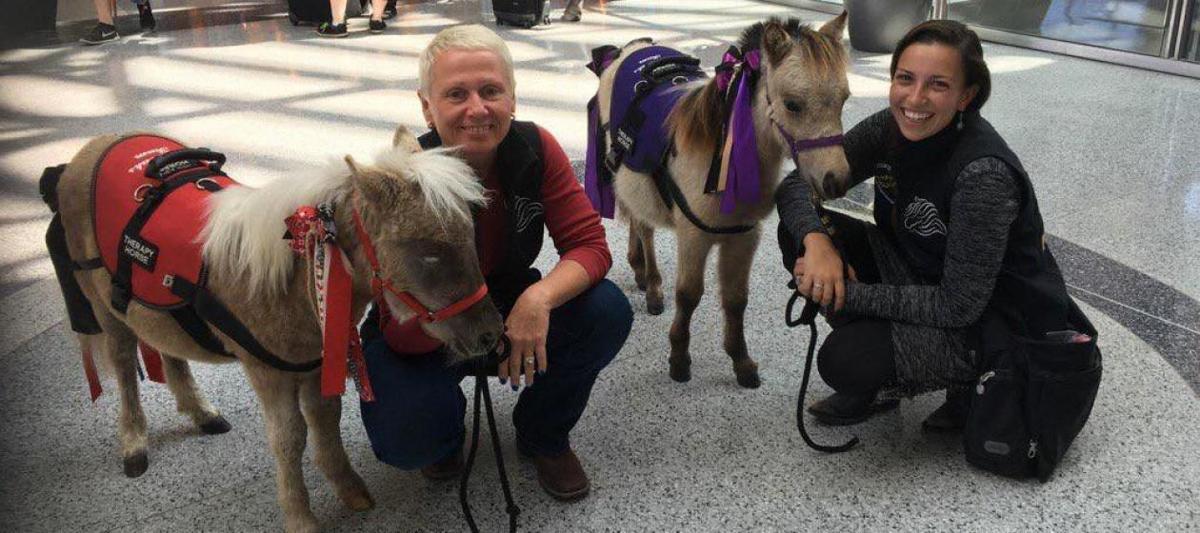 Ponies at airport
