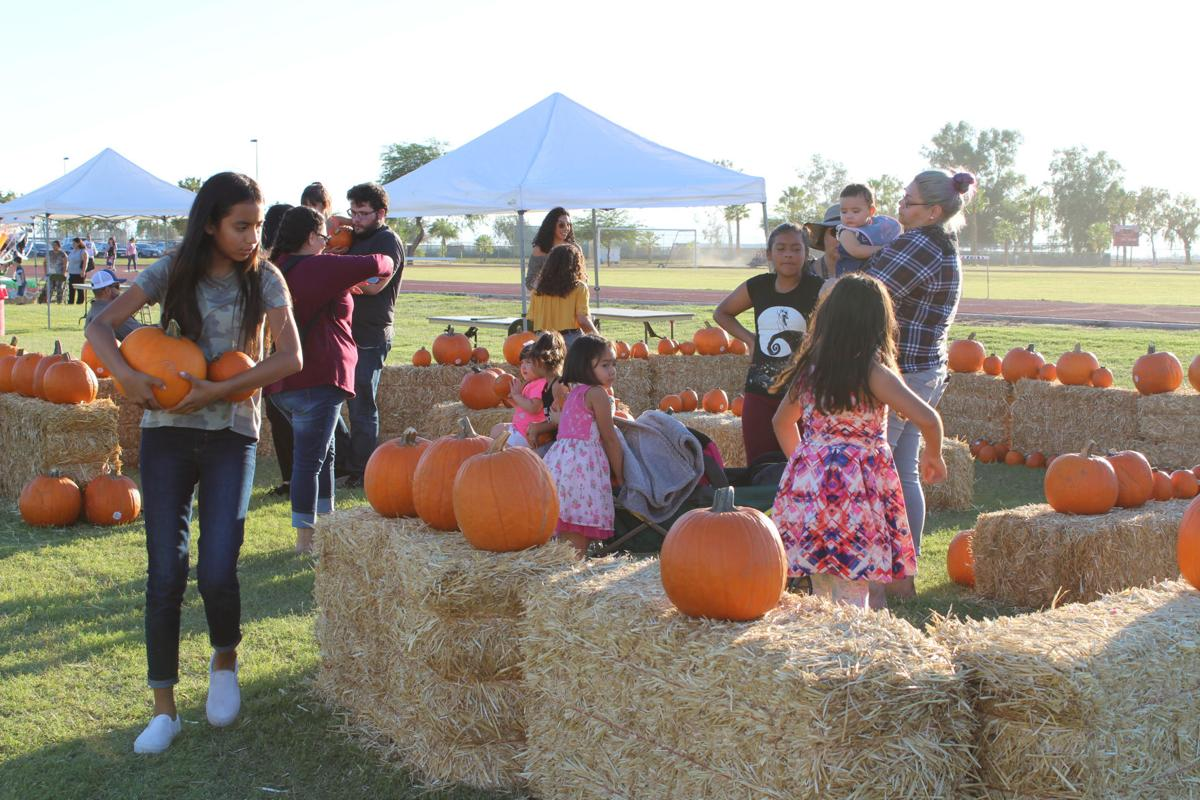 IVC pumpkin patch