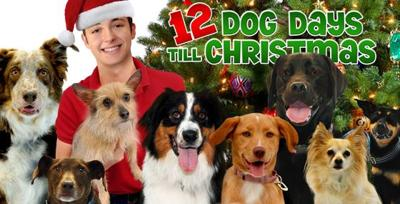 12 Dog Days Till Christmas.A Film Preview The 12 Dog Days Till Christmas Reel