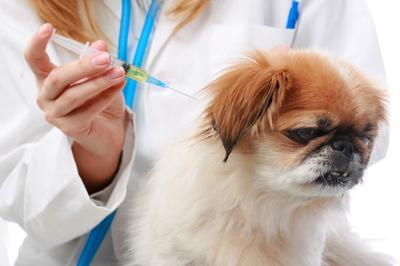Imperial County Animal Control Announces Low-Cost Rabies Vaccination Clinics