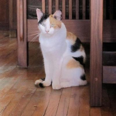 Lost in Echo Park: Friendly Calico Cat