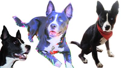 Lost in El Sereno: My Amazing Dog, Dino [updated\
