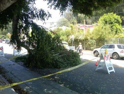 Tree trimmer needed at Echo Park & Baxter *