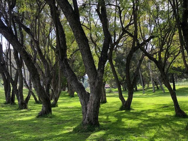 Empty green space between trees, Elysian Park