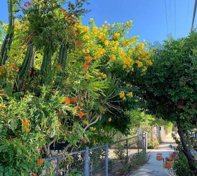 Echo Park Summer Blooms