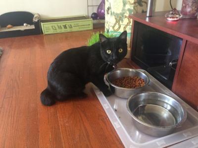 Lost in Echo Park: Pepe my cat