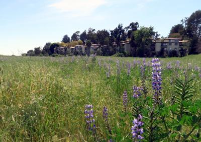 Parcel S in Monterey Hills