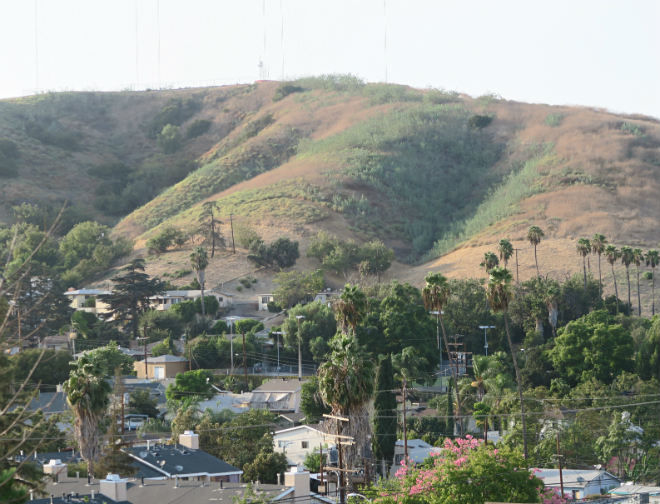 """""""This is their home, too """" — Why you shouldn't be surprised to see a bobcat in Ascot Hills Park"""
