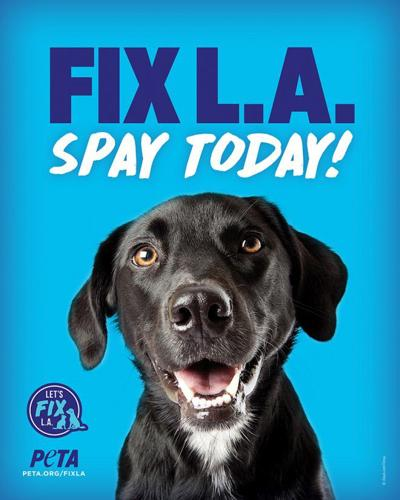 Fix LA Spay Today flyer
