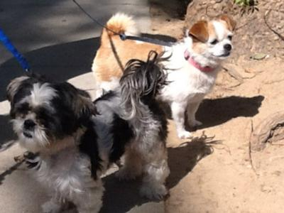 Found in Eagle Rock: Two female dogs on Colorado*