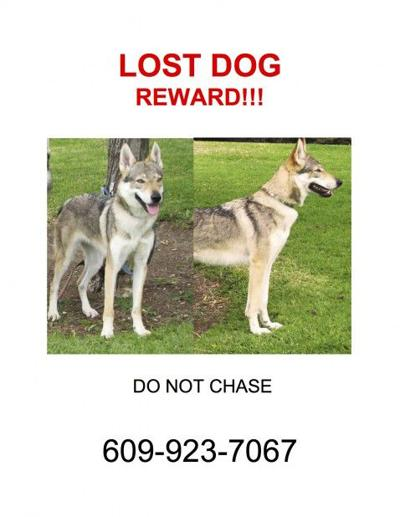 Lost in Angeleno Heights: A friendly but scared dog named Sevilen