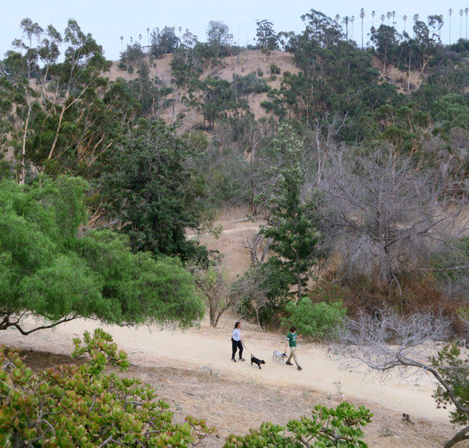 Dogs & Disc Golf Players: Find out who benefits from $12.5 million in Elysian Park improvements