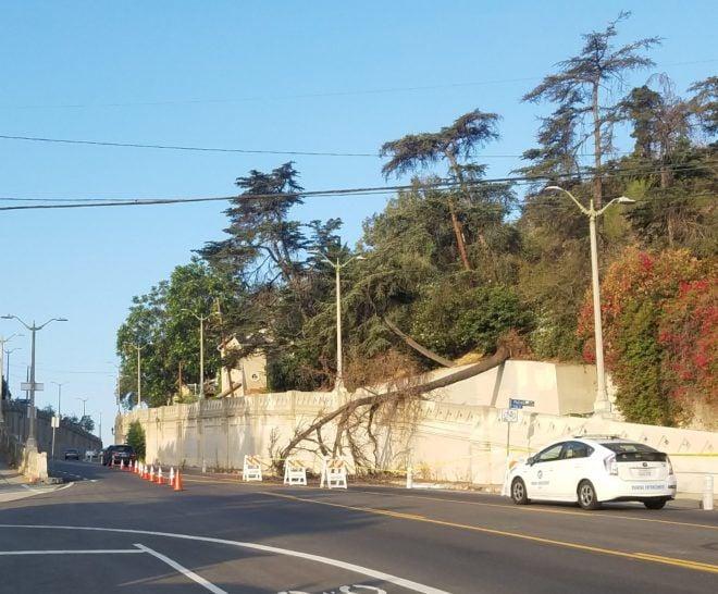 Tree falls across Monterey Road