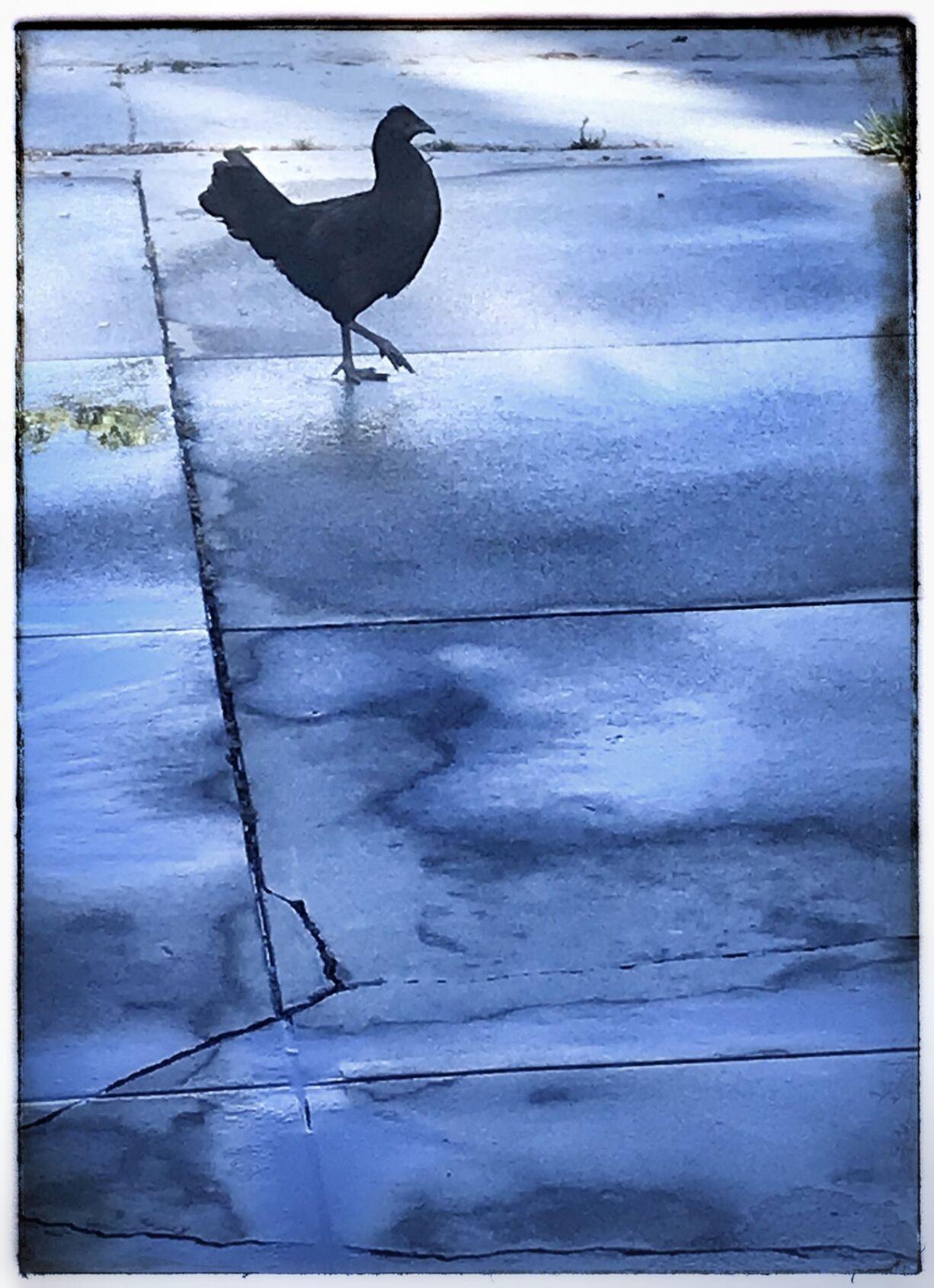 East LA chicken