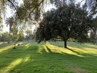 Elysian Park Shadows