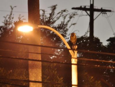Urban night owl discovers new Echo Park nightspot
