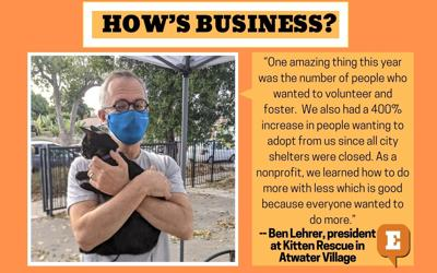 How's Business Kitten Rescue