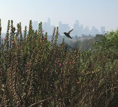 Humming above Echo Park