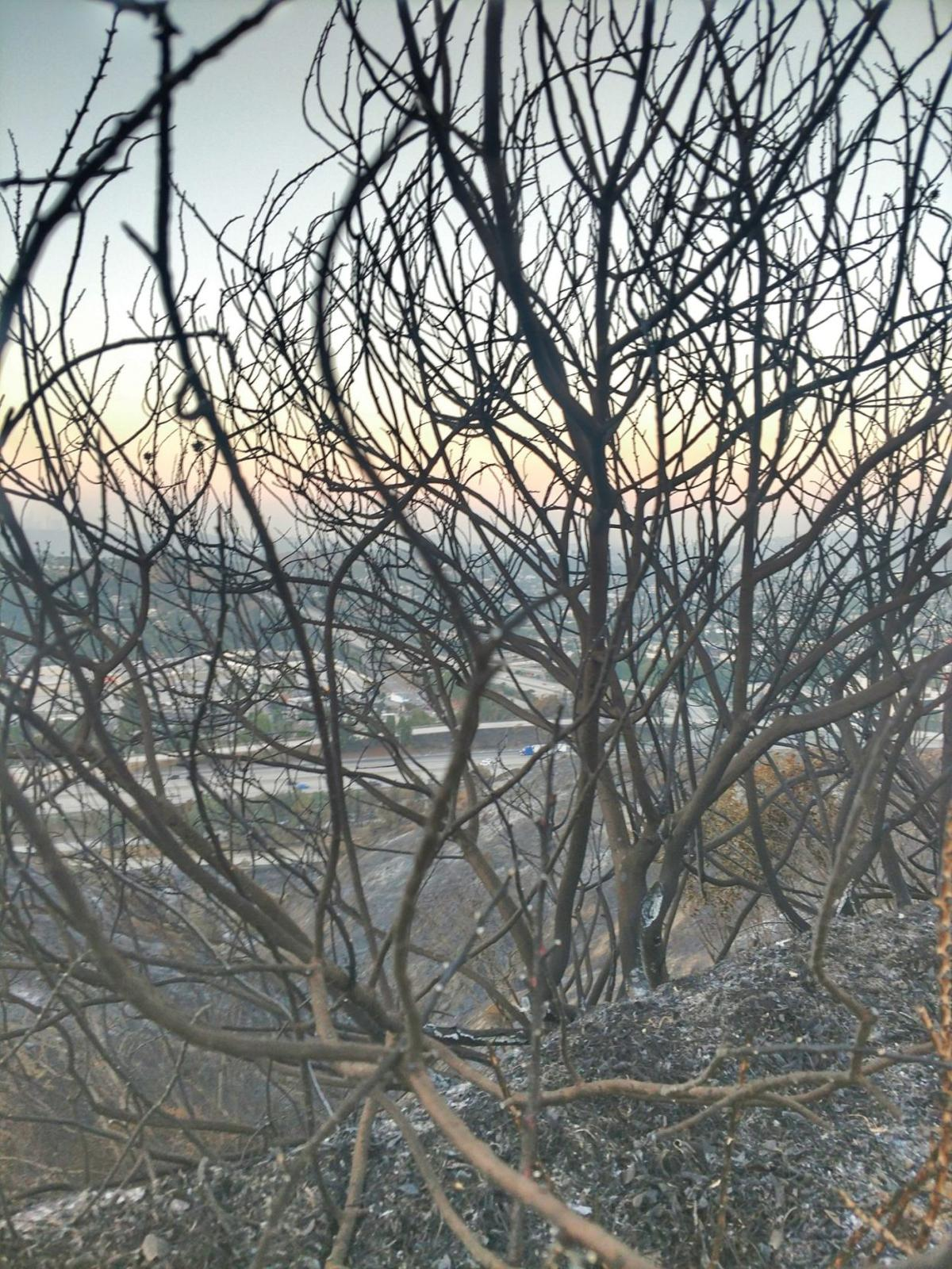 Charred hill overlooking Eagle Rock