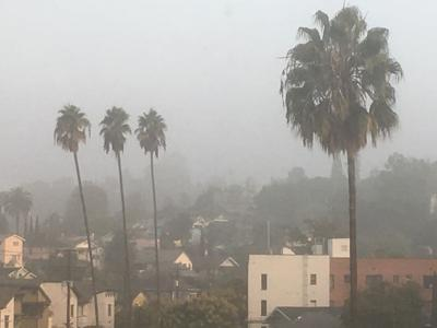 Fog and palms in Echo Park