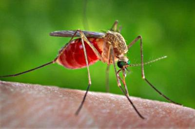 West Nile virus detected in Los Feliz