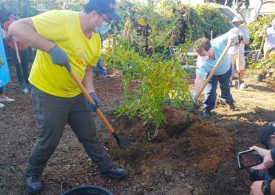 Planting 200,000th tree - pomegranate