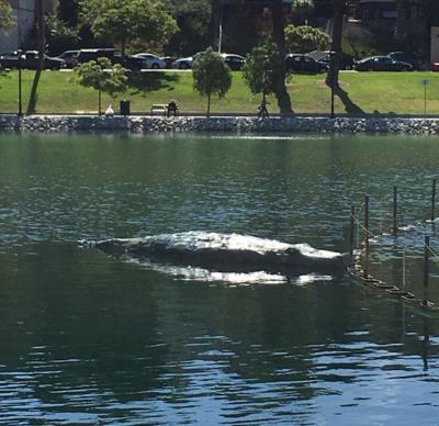 The artist behind the Echo Park Lake crocodile