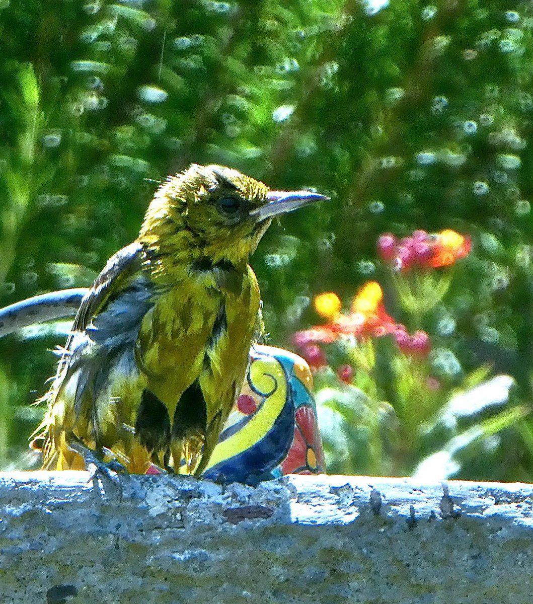 bird bath 1 sandy driscol.jpg