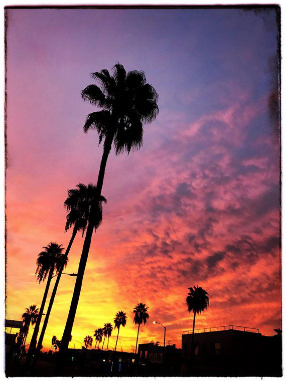 East L.A.: Morning Palms