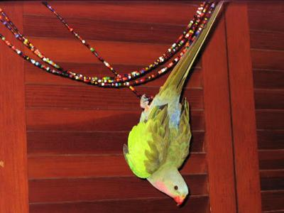 Echo Park parrot named Charley goes missing