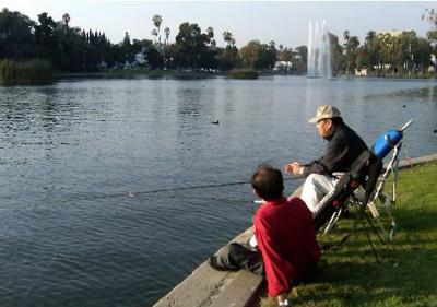 What is killing the fish in Echo Park Lake?
