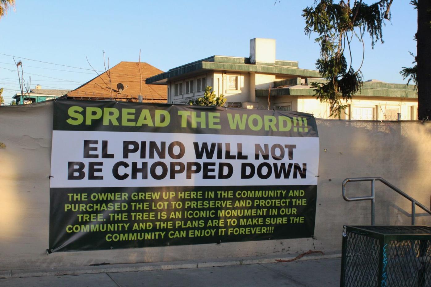 El Pino will not be chopped