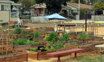 New community garden grows in Elysian Valley