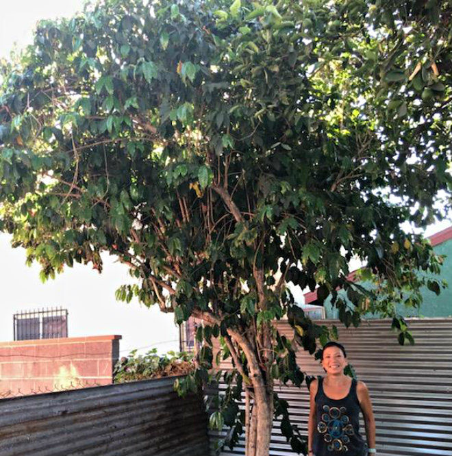A Coffee Tree Grows in Cypress Park: Daughter sips and savors the fruits of her father's labor