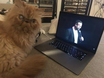 Lost in Echo Park: Orange Persian cat