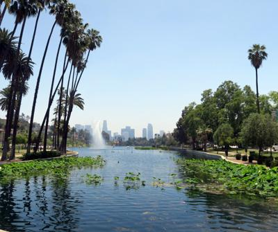 Echo Park Lake Lotus Bed
