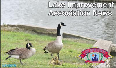 LIA Website Logo