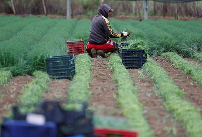 farmwork