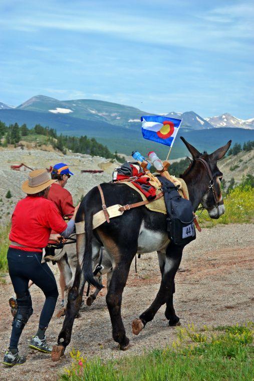Burro Race 2
