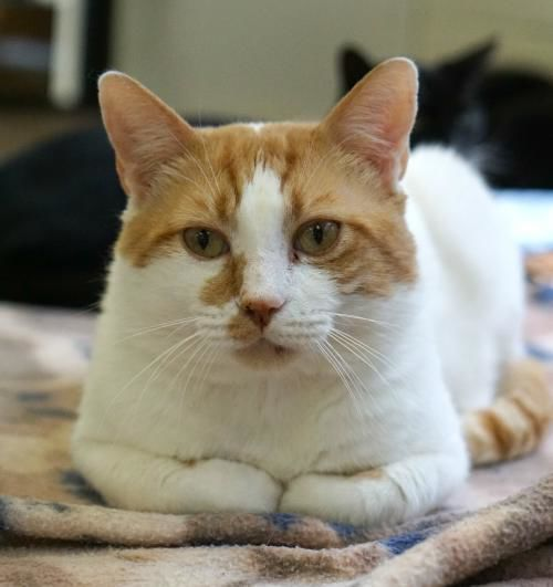 Furry Friends of Franklin County