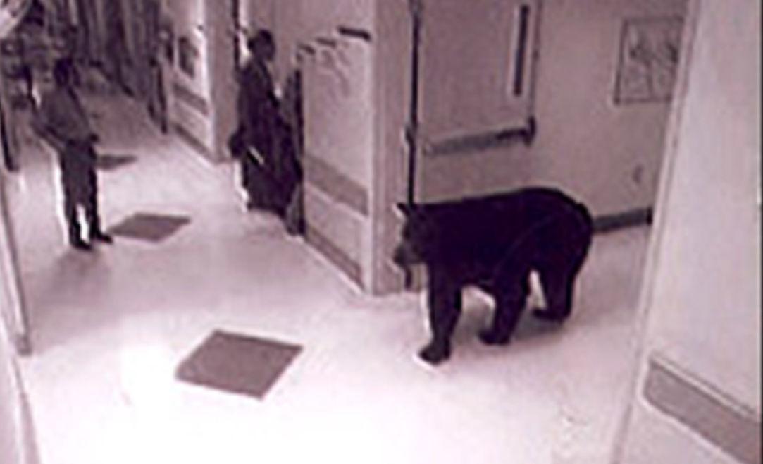 BEAR surveillance pic